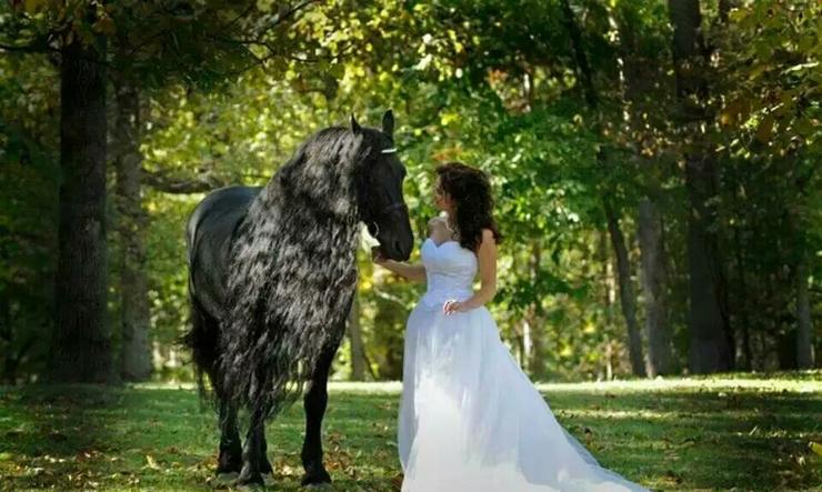 高端草坪婚礼